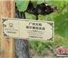 张裕经销商考察团赴蜜合花酒庄开展葡萄树认领活动
