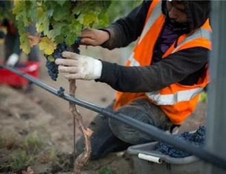富邑集团旗下葡萄园和酒庄均获可持续发展认证