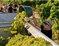 2018年德国葡萄采收日期创下最早记录