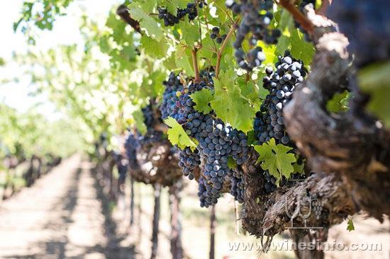 vino3-1024x682.jpg