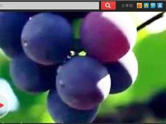 云南弥勒 这块令法国人羡慕的肥沃土地 中国的葡萄酒之乡
