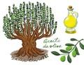 林殿理:西班牙另一宝——橄榄油