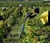 法国季节工匮乏 餐饮旅馆业及葡萄种植业遭遇用人荒