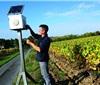 法国已有80家葡萄园用音乐降低葡萄藤的死亡率