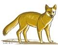 林殿理:茂莱山谷的狐狸