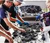 2018年澳洲葡萄收获报告发布 葡萄收购价格持续攀升