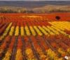 西班牙:除了雪莉酒,还有4000多年的老牌产国酒