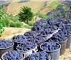 葡萄牙:万花筒里看品种