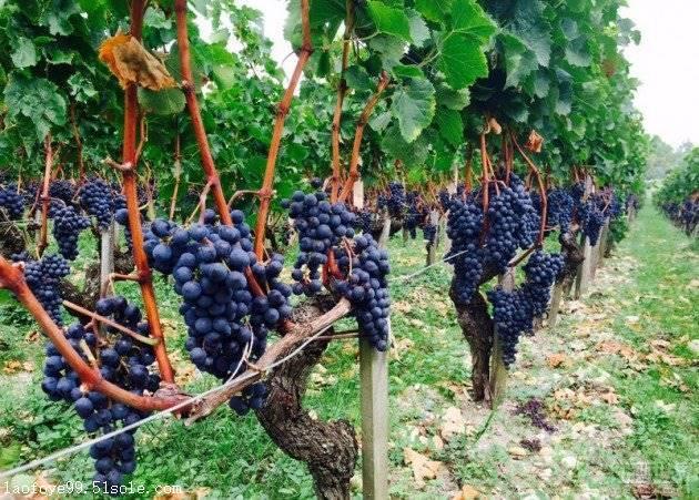 柳州进口红酒批发 柳州葡萄酒拿货加盟代理