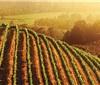 2018年美国加州葡萄生产报告
