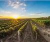 戎子酒庄国家级酿酒葡萄栽培项目通过中期验收