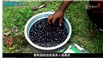 印度小伙酿造的葡萄酒里面加入很多香料