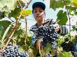 2018年中国位列格鲁吉亚葡萄酒出口国第三位