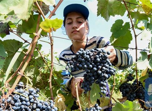 关注进口葡萄酒