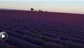 世界闻名的薰衣草故乡 出产优质葡萄酒