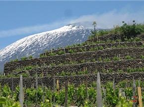 意大利将出新规以酒庄游带动旅游产业发展