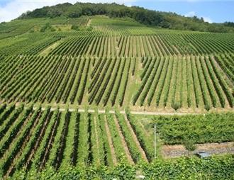 意大利2019年度葡萄酒產業補貼分配方案發布