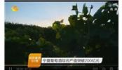 宁夏葡萄酒综合产值突破200亿元