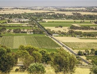 天氣影響巴羅莎葡萄采摘 澳高端葡萄酒面臨供應限制