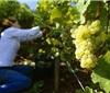 最终数据:2018德国葡萄酒产量达10.27亿升