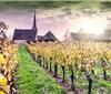 """千年""""基因历史""""揭示酿酒葡萄遗传起源"""
