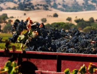 2019年澳大利亚酿酒葡萄收获超过预计产量