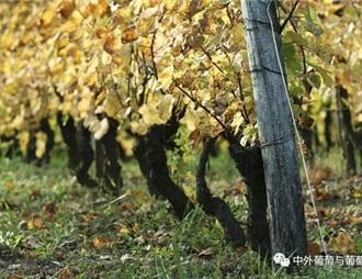 葡萄苗木進口與申請流程