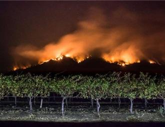 紐約經銷商拒售加州受大火煙霧污染葡萄酒