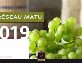 香檳區2019年葡萄成熟觀測網已正式啟動