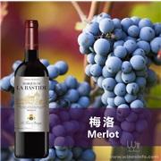 【巴斯蒂德梅洛干紅葡萄酒】法國邦菲斯Bonfils酒莊原瓶原裝進口紅酒清場處理