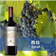 【巴斯蒂德西拉干紅葡萄酒】法國邦菲斯Bonfils酒莊原瓶原裝進口紅酒清場處理