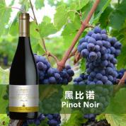 Marquis de Cibadiès Pinot Noir - IGP Pays d'Oc