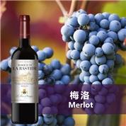 巴斯蒂德梅洛干红葡萄酒