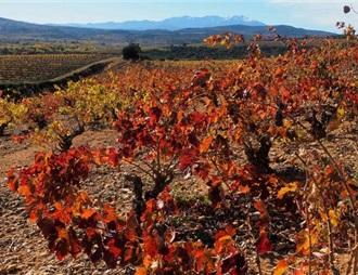 春霜及暑热 2019法国葡萄酒可能减产12%