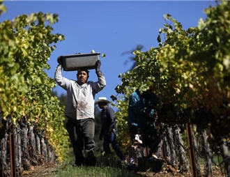 索诺玛获【葡萄酒爱好者】杂志评为年度产区