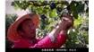 中國這個地方,美國《紐約時報》稱贊可以產出最好喝的葡萄酒