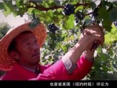 中国这个地方,美国《纽约时报》称赞可以产出最好喝的葡萄酒