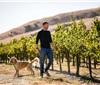 美国加州酒农担心经济衰退纷纷削减葡萄产量