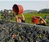法国2019年葡萄酒产量预计将大跌