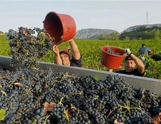 法國2019年葡萄酒產量預計將大跌