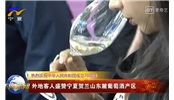 昌黎萬畝釀酒葡萄全面進入采收季
