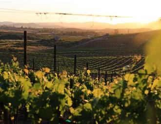 墨西哥葡萄酒越来越受欢迎