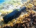 首届海底陈酿葡萄酒大会在西班牙毕尔巴鄂举行