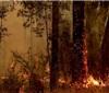 山火冲击澳大利亚葡萄酒行业 长期影响尚待评估
