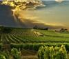 法国葡萄酒业前景黯淡