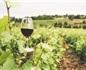 美國加征葡萄酒關稅威脅法國10萬工作崗位