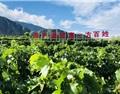 2019年四川高山葡萄酒产区发展报告(上)