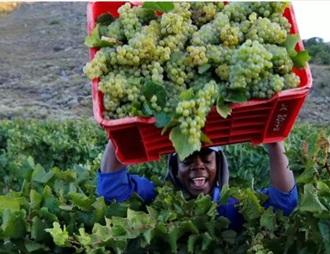 南非因疫情颁发的禁令将导致葡萄酒行业的崩溃