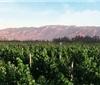 宁夏3000万贴息补助资金支持酿酒葡萄产业发展