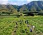 疫情影响南半球葡萄酒产区的酿季